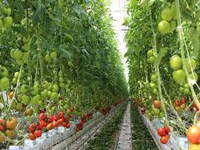 Farmer reaps rich with greenhouse technology