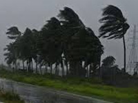 Five lakh trees to stop cyclone devastation