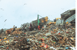 SC agrees to subsidise five waste to energy plants