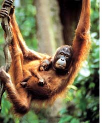 Mining giant keen on exploiting Borneo forests