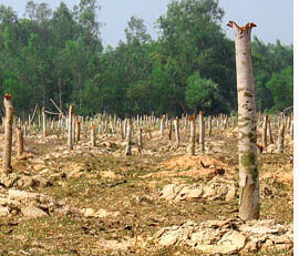 Foresters, villagers vie for land in Bengal