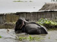 Flood fury affects Kaziranga National Park