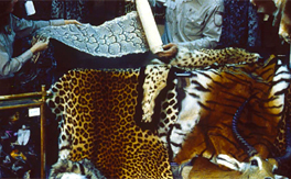 Illuminating the blind spot: a study on illegal trade in leopard parts in India (2001-2010)