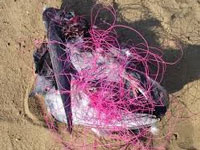 Nylon manja in use for kite flying despite nationwide ban, injuries to birds continue