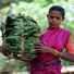 Major battle over minor forest produce