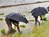 Monsoon expectation robust in India, farm-related stocks shine