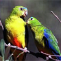 Hope for resurrecting a functionally extinct parrot or squandered social capital? Landholder attitudes towards the orange-bellied parrot (Neophema chrysogaster) in Victoria, Australia