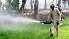 State of pesticide regulations in India