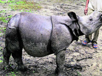 Assam CM takes stock of rhinos rescued from floods in Kaziranga