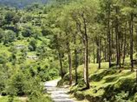 1,000 roads in Kumaon await forest clearance