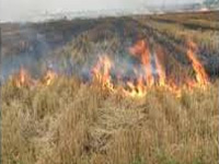 Stubble burning: CM incentives for farmers from Modi