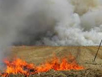 296 Haryana farmers challaned for burning wheat stubble