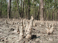 Sunderbans' water getting toxic: Scientists
