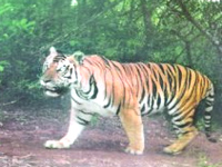 Bandipur tiger reserve uses drone to spot forest fire