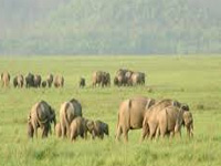 Wildlife Conservation Week from Oct 2
